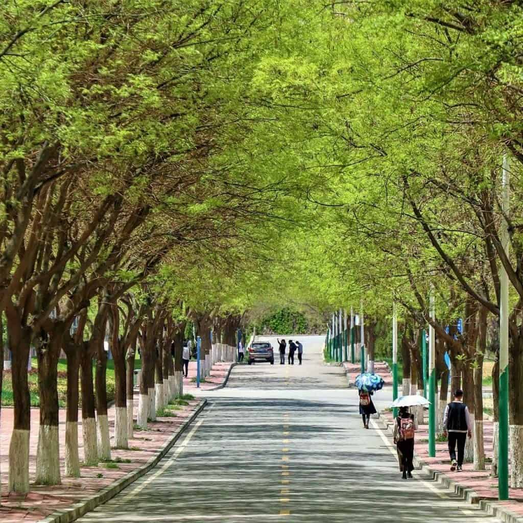 China University Campus.jpg